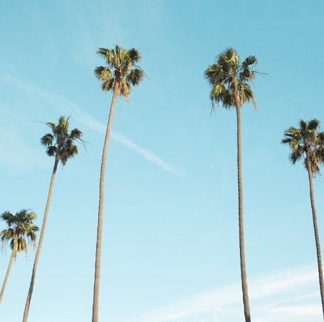 palm-trees-small